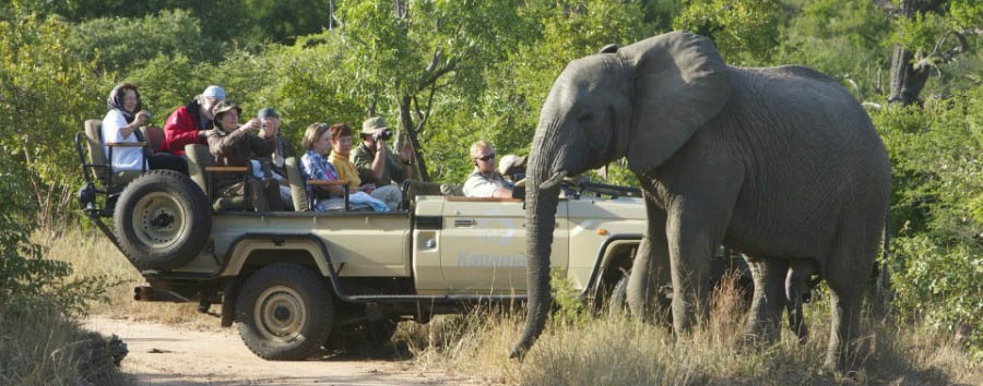 South Africa - Game Drive in The Kapama Private Game Reserve