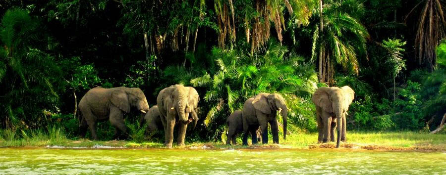 Unique Lake Victoria Experience - Tanzania Rubondo Island Park, Elephants on The Lake Banks