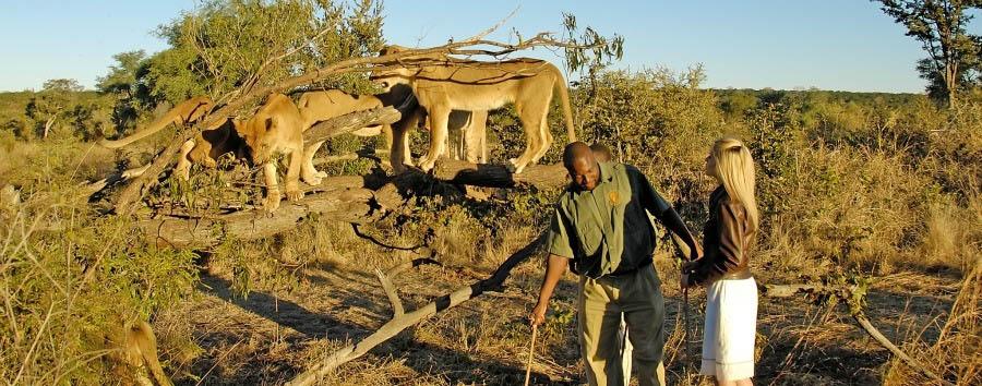 Navigando lungo il Chobe - Zimbabwe Walking Safari in Stanley & Livingstone Private Game Reserve