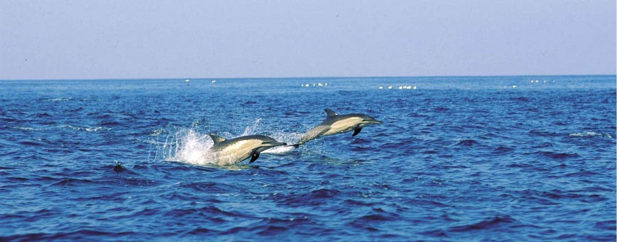 Garden Route Classic - South Africa Dolphins near TsiTsikamma National Park