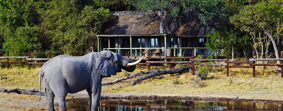 #solonatura - Botswana Elephant in front of The Savute Safari Lodge