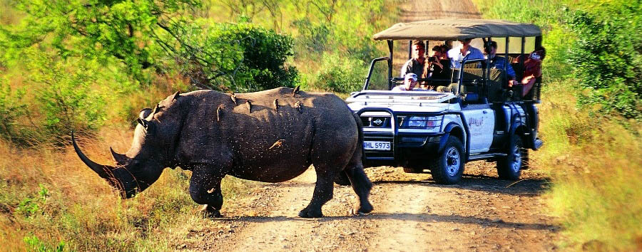 Wildlife & Warriors - South Africa Game Drive in Hluhluwe-Umfolozi Game Reserve