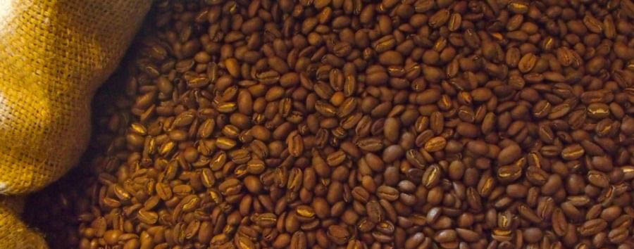 Hola Panama: meet the locals - Panama Roasted Geisha Coffee at The Janson Family's Coffee Farm