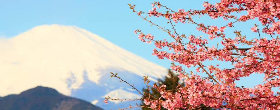 Armonia Giapponese - Japan View of Mt. Fuji