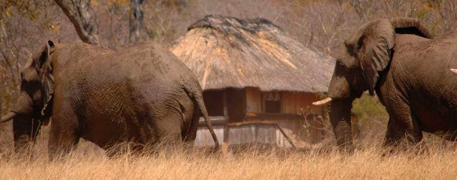 Zimbabwe - Hwange National Park, Ivory Lodge