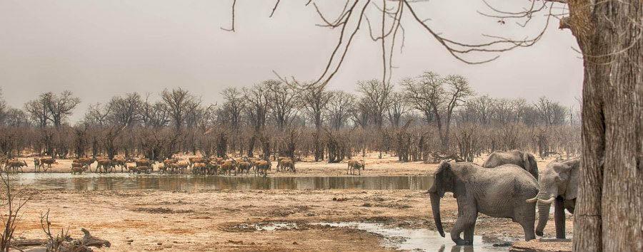 Il volto segreto del Botswana - Botswana Hyena Pan, Waterhole