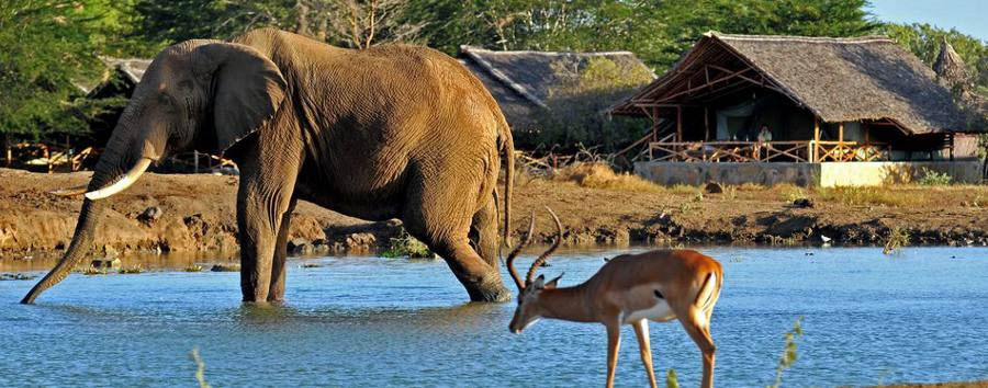 Satao Camp - Animals at the waterhole
