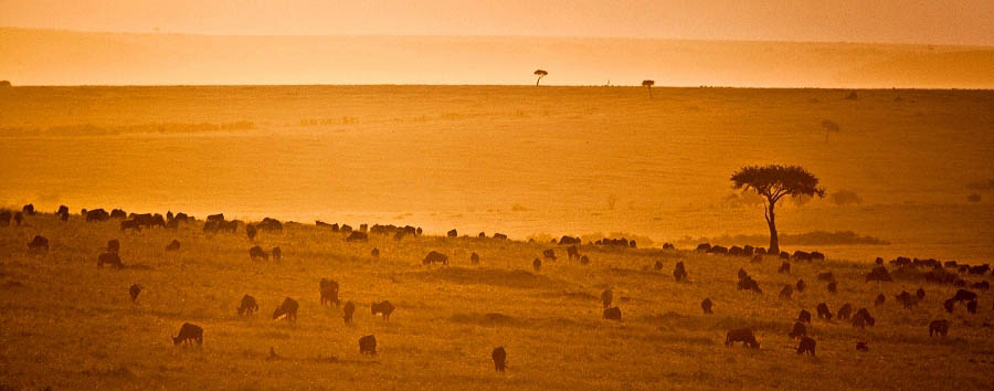 Kenya - Sunset in the Masai Mara National Park