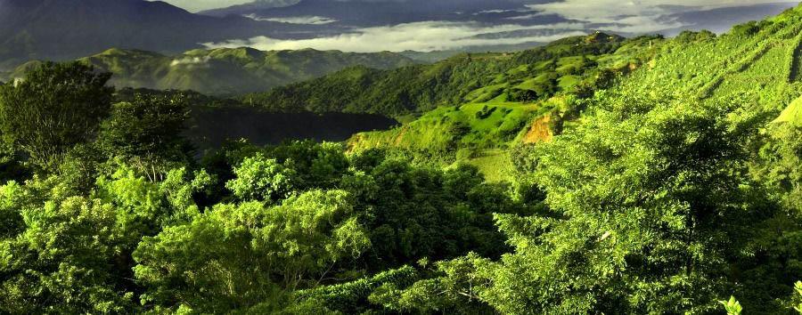 Indimenticabile Centro America - Costa Rica Monteverde Cloud Forest