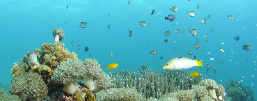 Mare a Cebu - Philippines Cebu, Marine Sanctuary