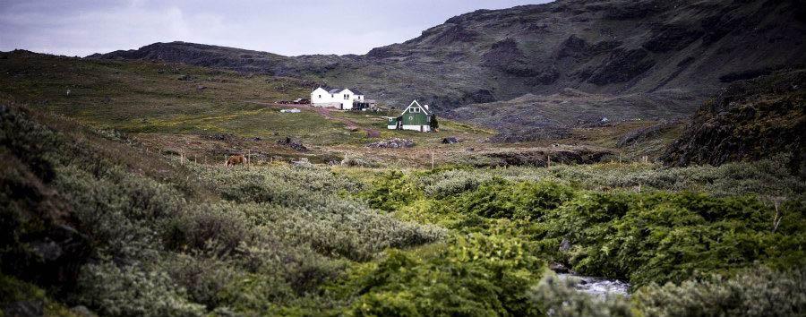 Groenlandia del Sud Explorer - Greenland Tasiusaq Sheep Farm © Mads Phil/VisitGreenland A/S