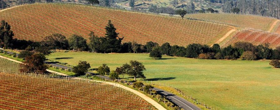 Casona Matetic - Matetic vineyards