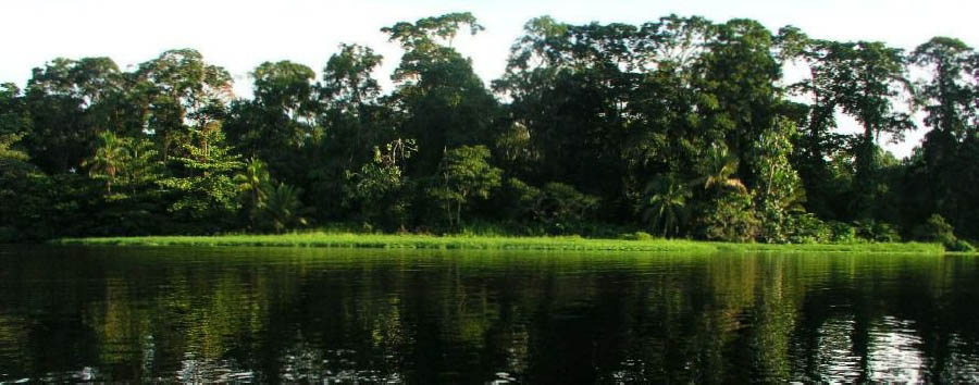 Unexpected Costa Rica & Mexico - Costa Rica Tortuguero National Park, River Canal View