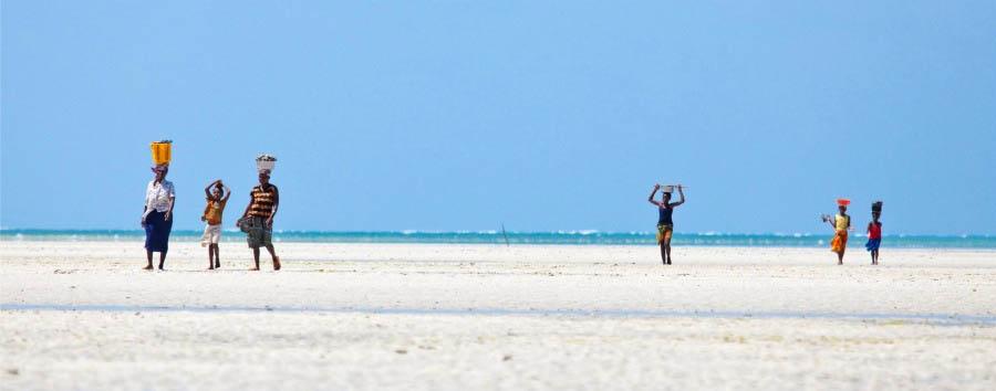 Meet the dolphins - Mozambique Ibo Island, Arimba Beach