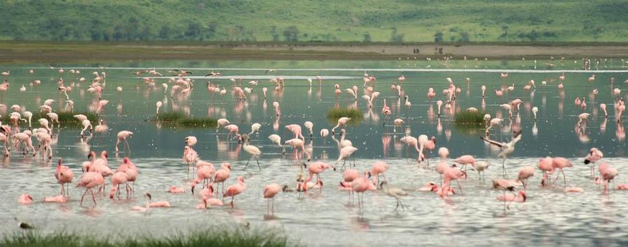 Circuito del Nord à la carte - Tanzania Flamingos at Ngorongoro Crater