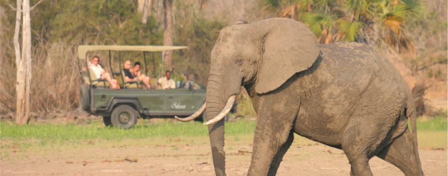 Tanzania del Sud: safari e mare - Tanzania Gane Viewing in the Ruaha National Park