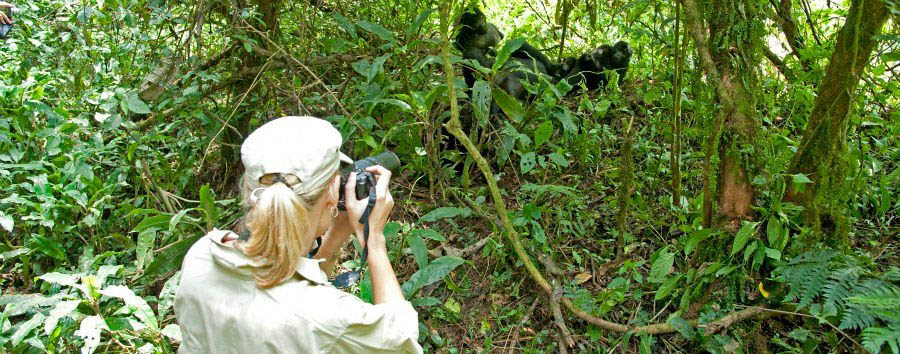 The undiscovered pearl of Africa - Uganda Sanctuary Gorilla Forest Camp, Photographing Gorillas