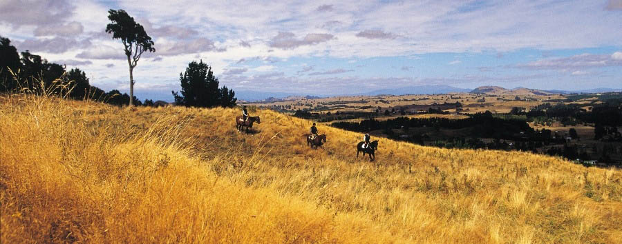 Time together in New Zealand - New Zealand Huka Lodge, Horse Riding