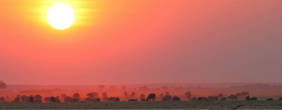 Botswana Baobabs - Botswana Buffalos and Sunset in Chobe National Park © Sunway Safaris