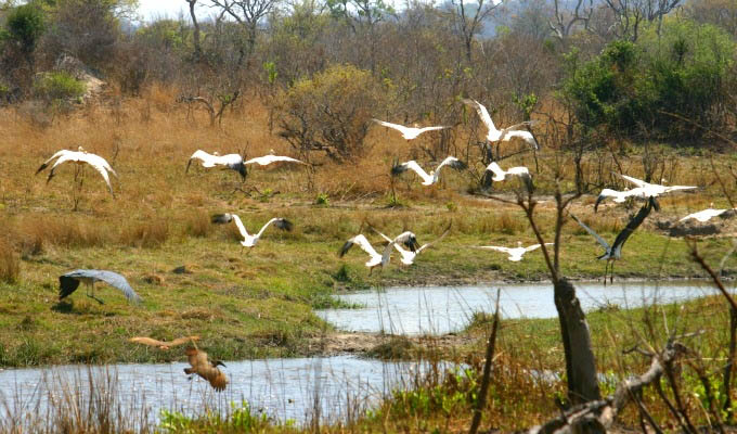 Birds soar in South Luangwa National Park - Zambia
