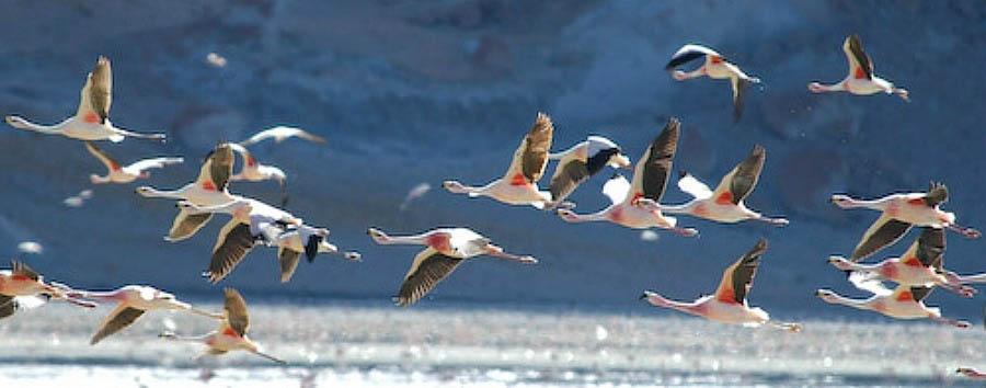 The Neverending Drive - Argentina Flamingos in Laguna Brava