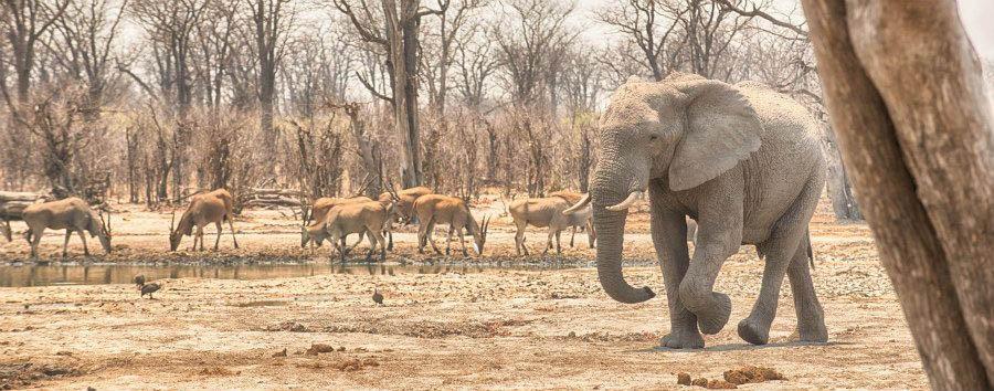 Vintage Botswana - Botswana Khwai, Hyena Pan Tented Camp, Waterhole