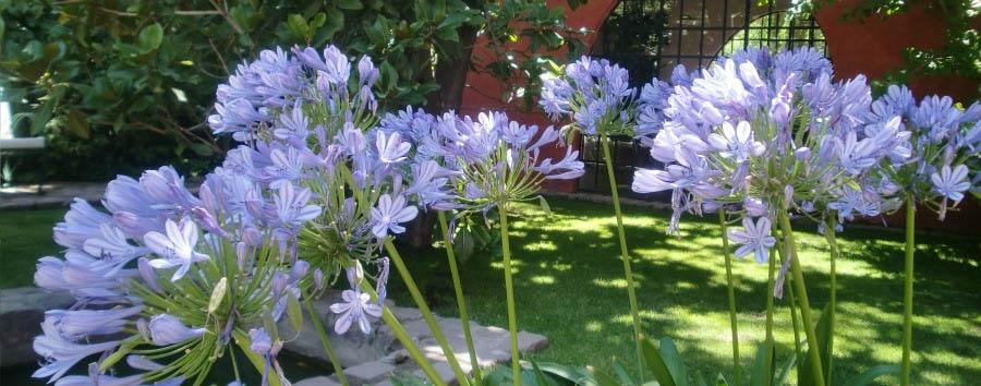 Finca Adalgisa - Gardens