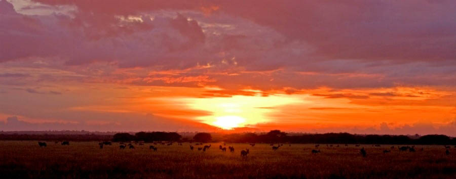 Under The Botswana Sky - Botswana Amazing Sunset in The Chobe National Park