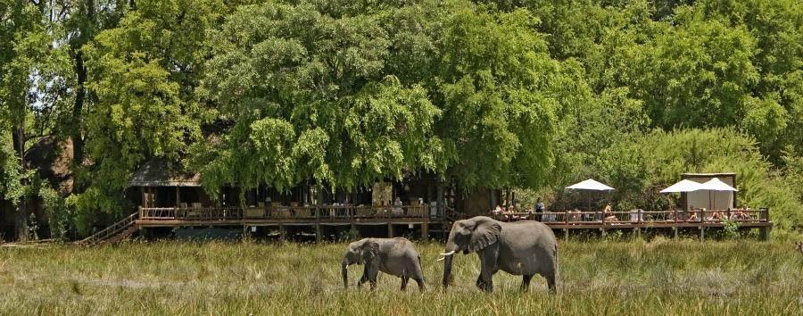 Highlights of Botswana - Botswana Sanctuary Chief's Camp, Elephants near The Main Area