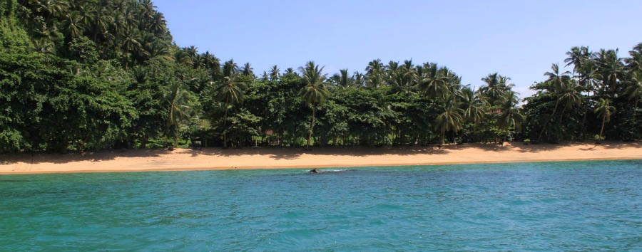 L'incanto del paradiso sconosciuto - São Tomé View of Praia Inhame