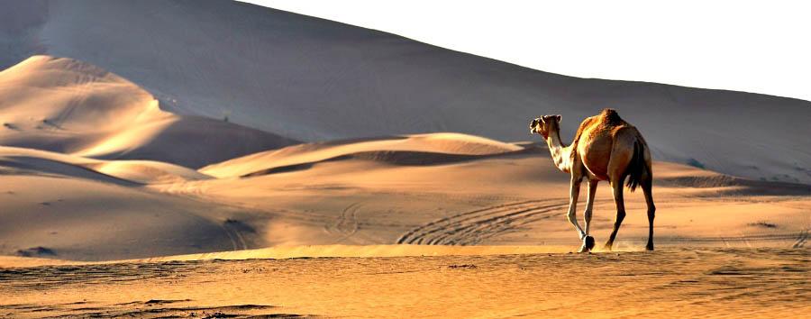 Da Dubai ad Abu Dhabi - Dubai Desert © Alexander Vogel
