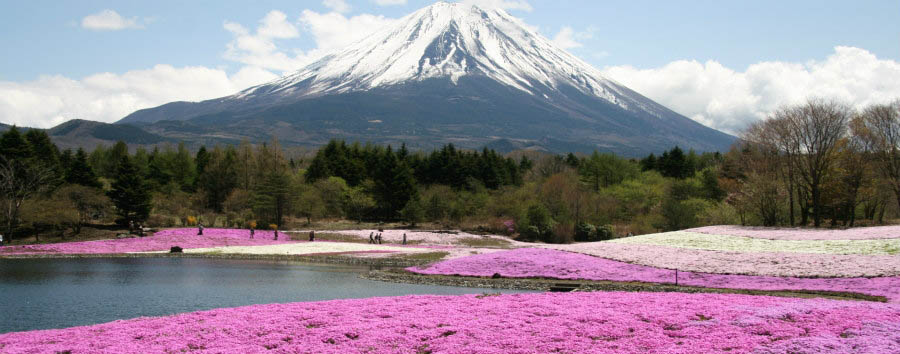 Japan - Cherry Blossom in Mount Fuji Area