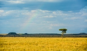 Unique Serengeti Experience