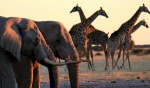 Botswana, natura selvaggia