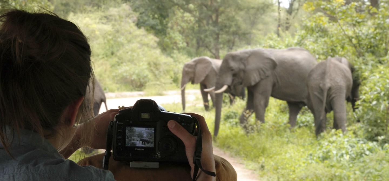 Tanzania: safari nel nord tra parchi e riserve