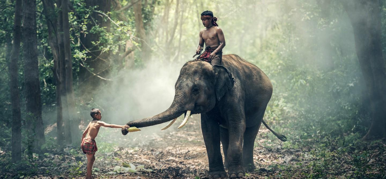Thailandia, esperienza con gli elefanti