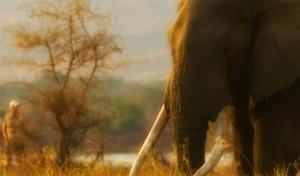 Intimate Zimbabwe