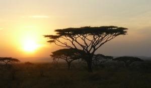 Tanzania al top