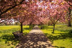 Viaggio a Londra in Open Garden Squares