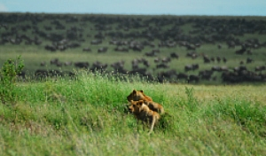 Tanzania Wildlife Breakaway