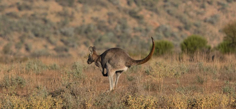 Il meglio di Kangaroo Island
