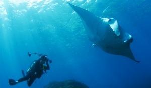 Blue Diving