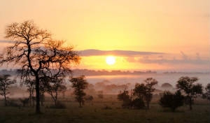 Sudafrica: Riserva di Sabi Sabi