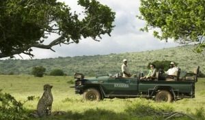 Safari in Sudafrica