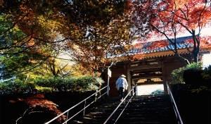 Giappone, la via dei templi