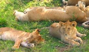 Africa: great safari experience