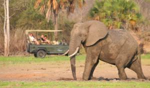 Tanzania del Sud: safari e mare