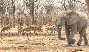 Vintage Botswana