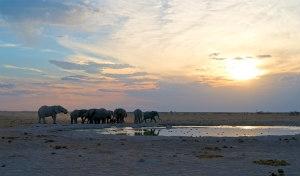 Botswana, acqua e deserto