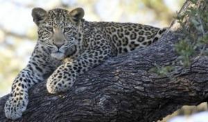 Safari e Ilha de Moçambique